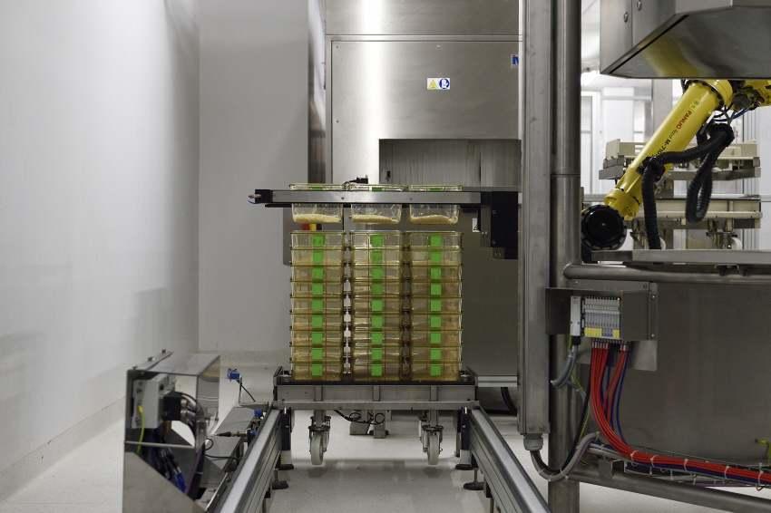 """Laverie entièrement automatisée, le robot PEGASUS permet de vider, laver et de remplir les litières de 600 cages à l'heure. Plateforme de zootechnie de l'unité mixte de service UMS 006 Inserm/UPS """"Centre régional d'exploration fonctionnelle et de ressources expérimentales (CREFRE)"""". Campus Oncopole de Toulouse-Langlade"""